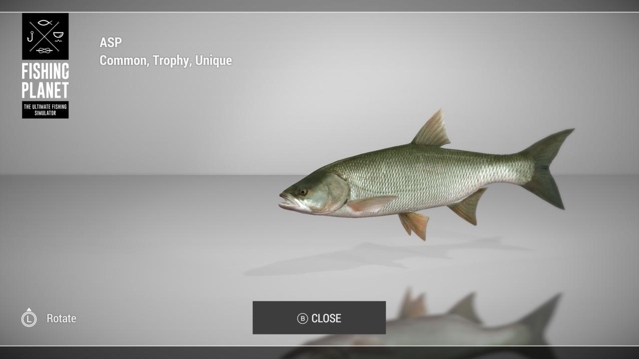 Fish_Show